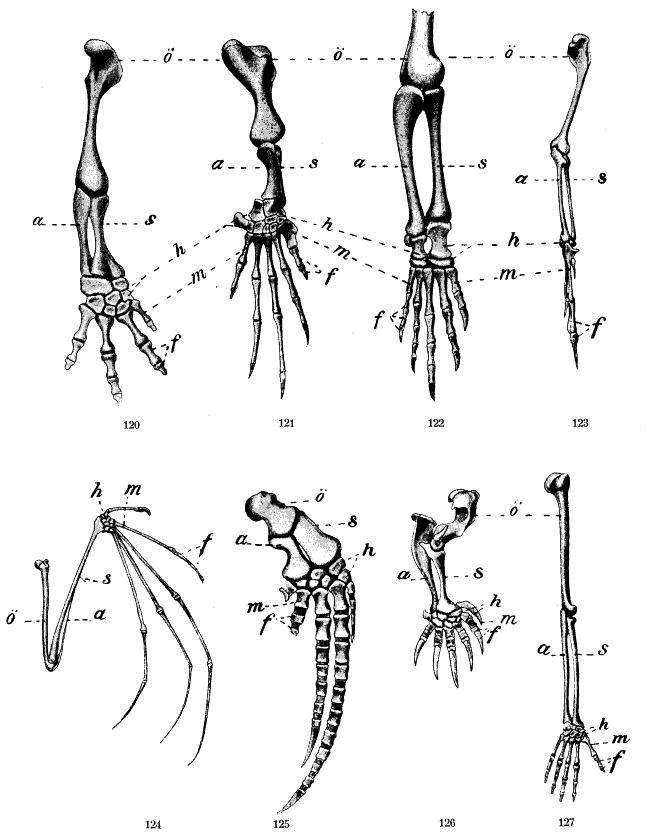 Belege für die Evolution » Serlo.org