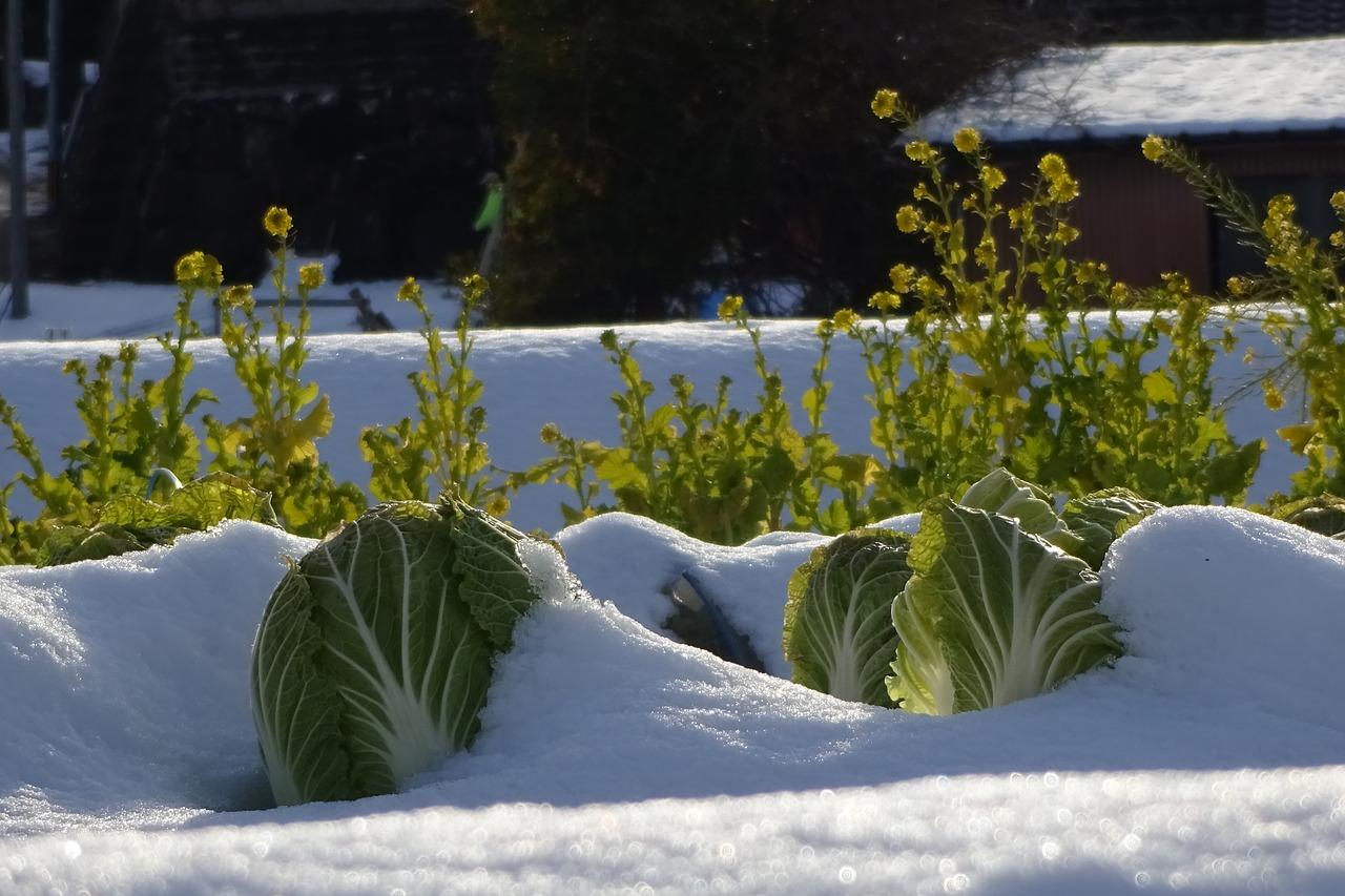 Der Garten auf den Winter vorbereitet