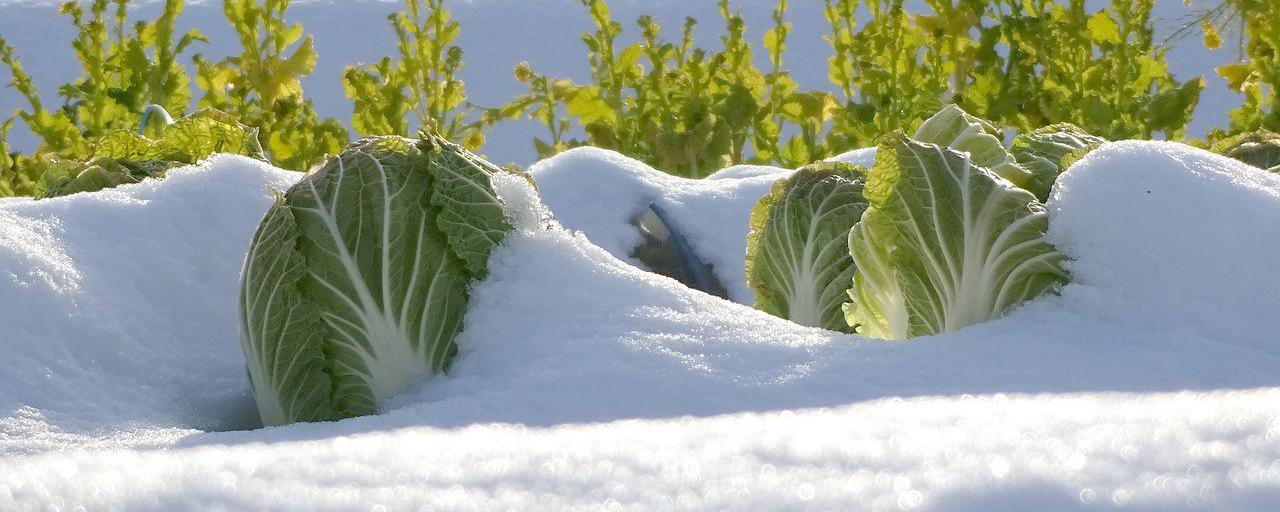 Wintervorbereitung Garten für den Winter vorbereiten.