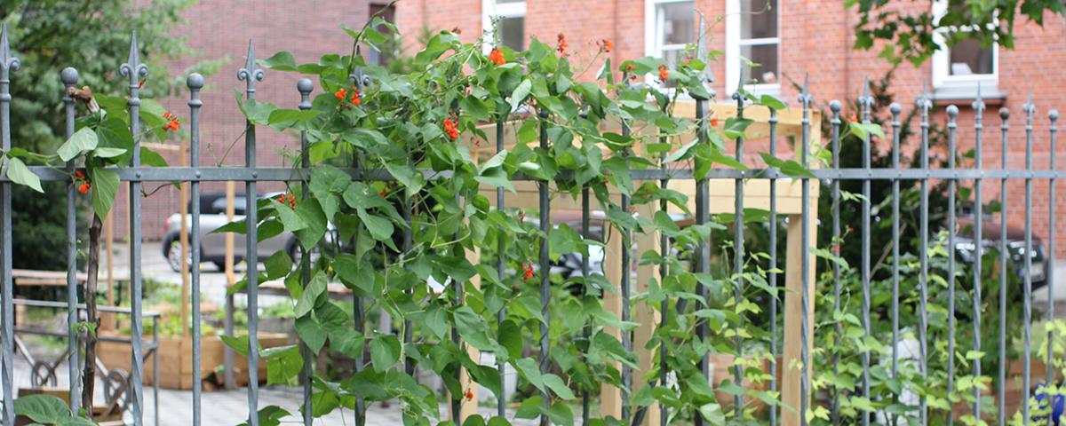 Gartenvorfreude, Eigenen blühenden Garten anlegen