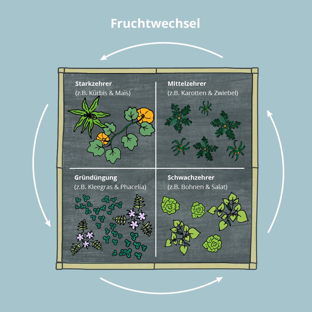 Grafik Fruchtwechsel