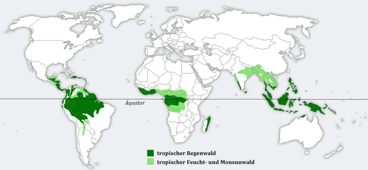 Verortung des tropischen Regenwaldes