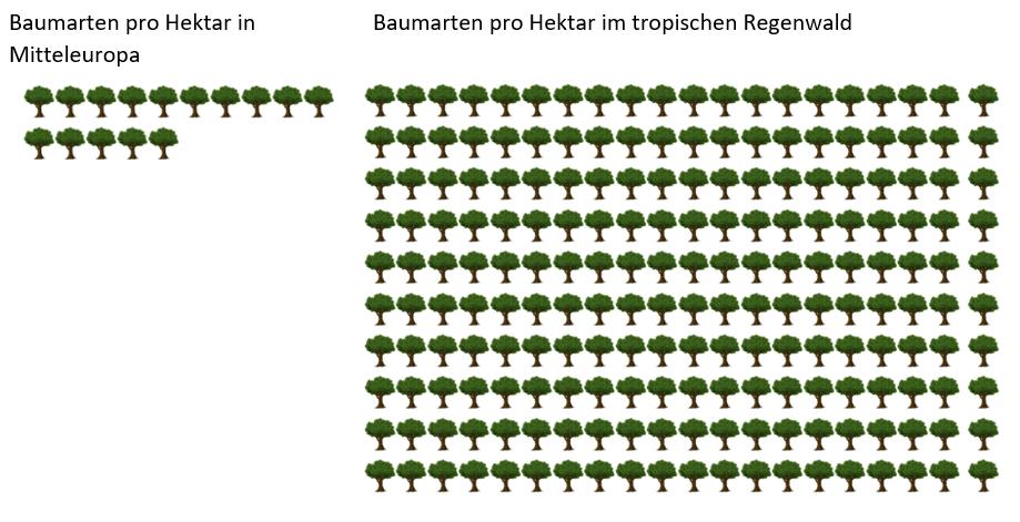 Skizze von Bäumen in Europa und im tropischen Regenwald