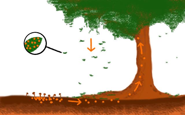 Skizze eines geschlossenen Nährstoffkreislaufes