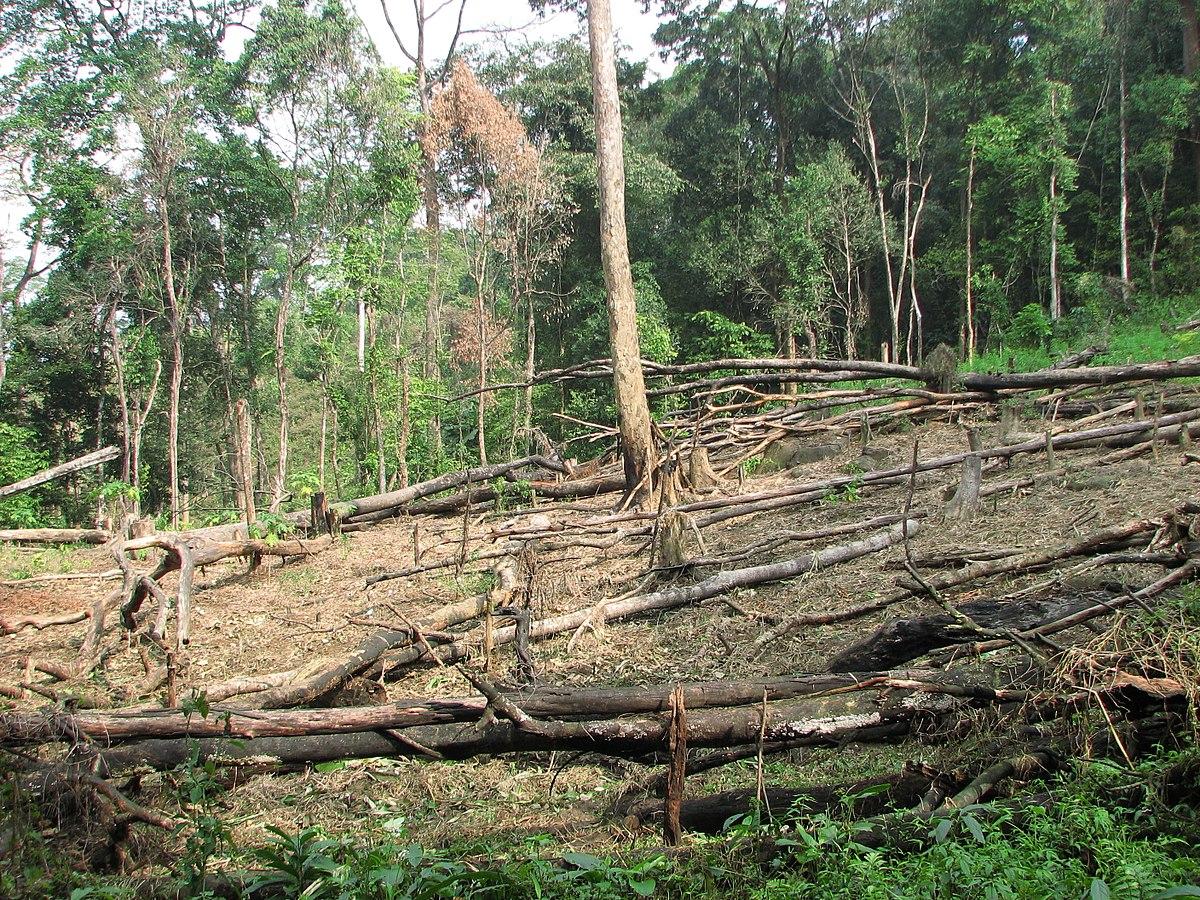 Bild eines abgerodeten Waldes