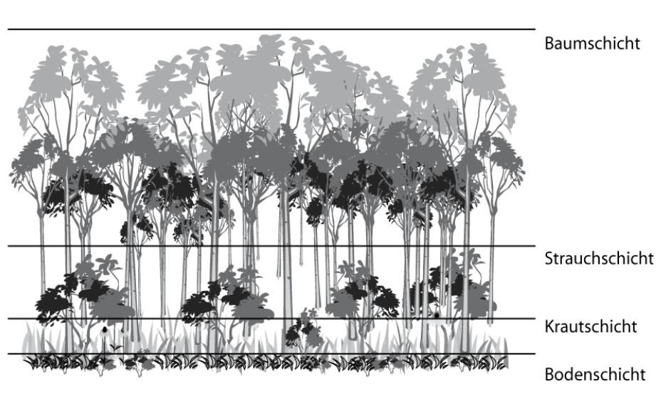 vegetation des regenwaldes lernen mit serlo. Black Bedroom Furniture Sets. Home Design Ideas