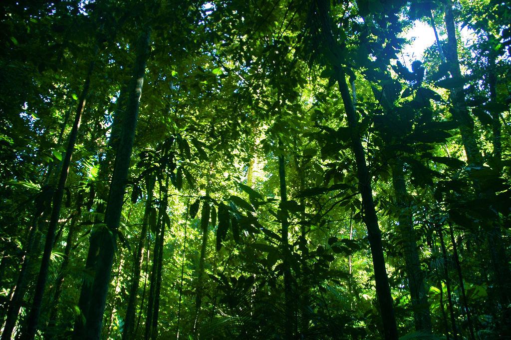 Bild eines tropischen Regenwaldes