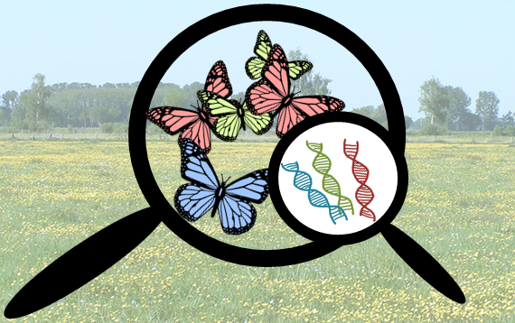 Abb.1 Die Betrachtungsebenen der Biodiversität: Ökosysteme, Arten, Gene