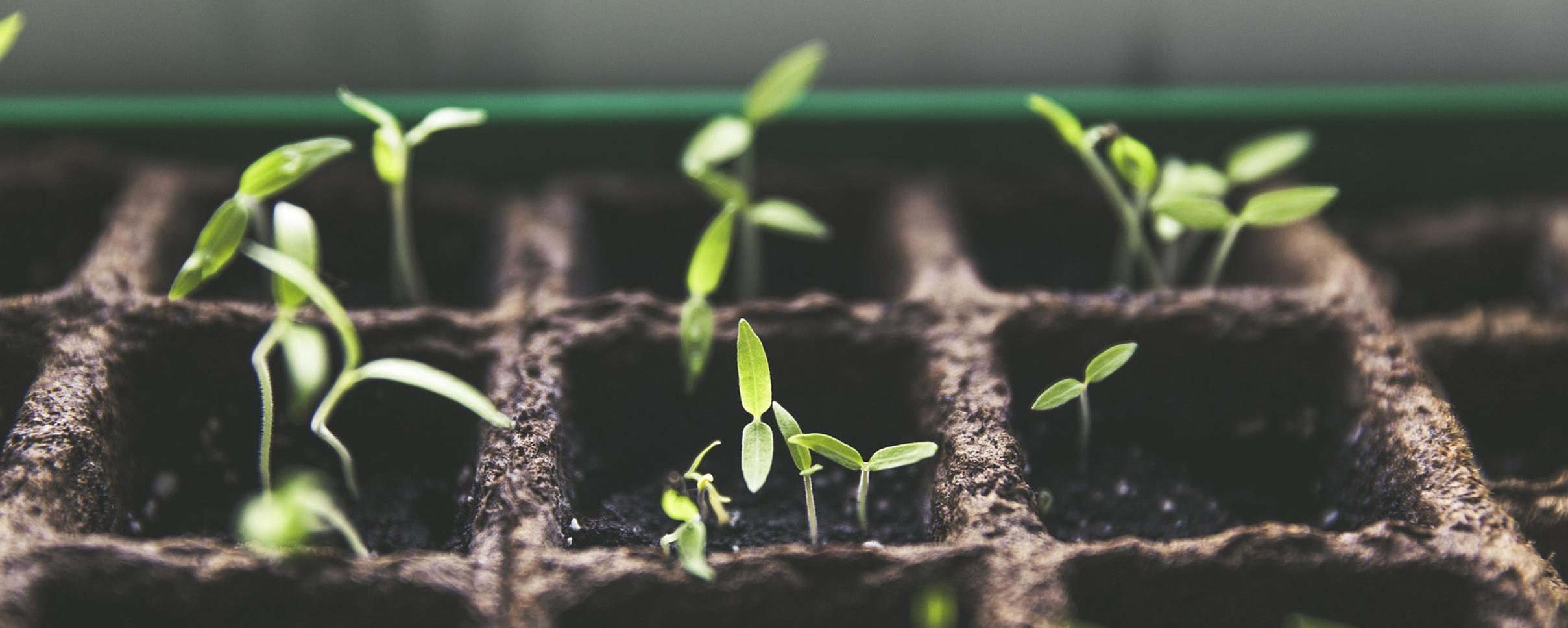 Permacultura y jardines urbanos