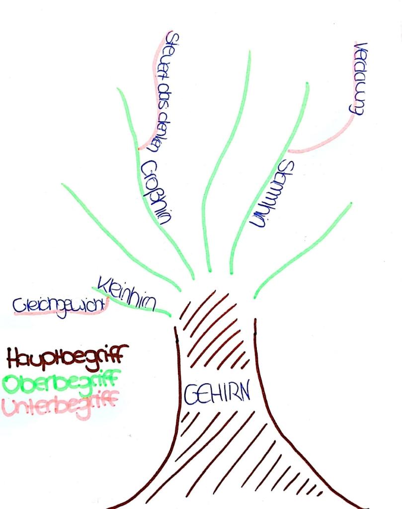 Der Aufbau anhand der Vorstellung eines Baumes