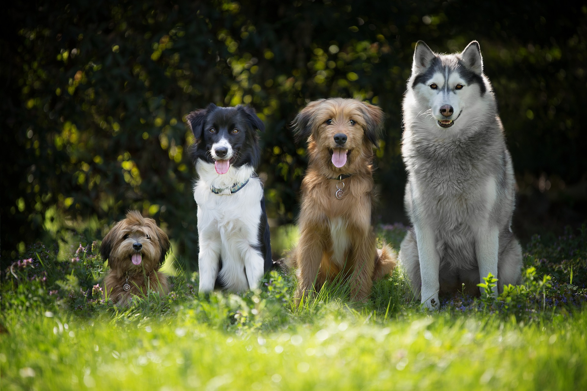 verschiedene Hunderassen im Gras