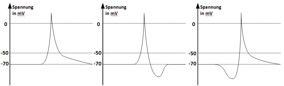 Zeitliche Änderung der Spannung in Millivolt bei einer Spannungserhöhung von 40 Millivolt