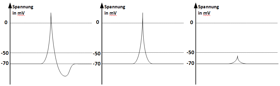 Zeitliche Änderung der Spannung in Millivolt bei der Spannungserhöhung um 15 Millivolt