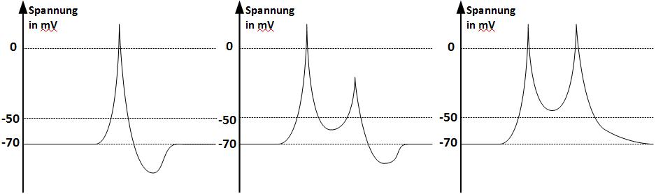 Zeitliche Änderung der Spannung in Millivolt bei einer sukzessiven Spannungserhöhung um zweimal 40 Millivolt mit Zeitabstand von drei Millisekunden