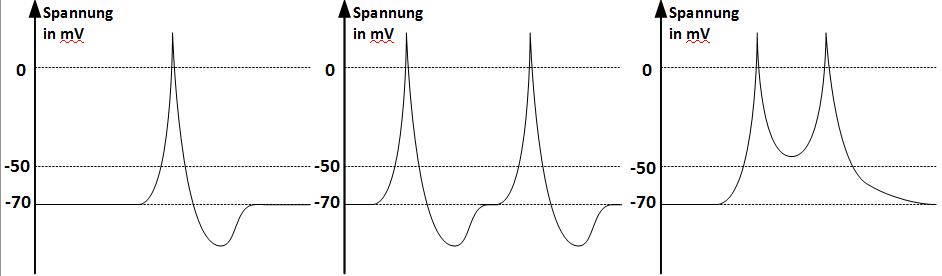 Zeitliche Änderung der Spannung in Millivolt bei einer sukzessiven Spannungserhöhung um zweimal 40 Millivolt mit einem zeitlichen Abstand von einer Millisekunde