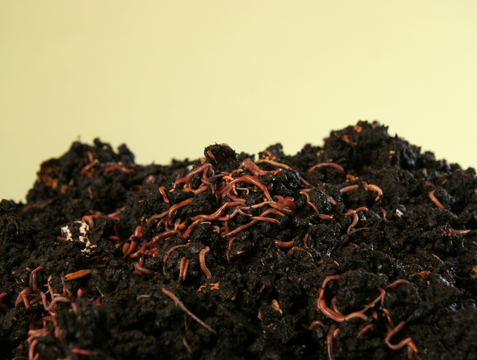 Redworms for composting