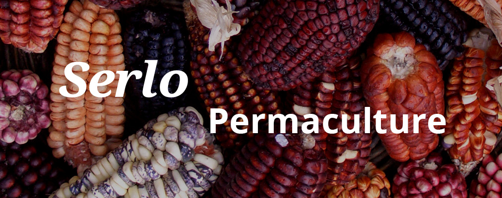 Serlo, open Permaculture education