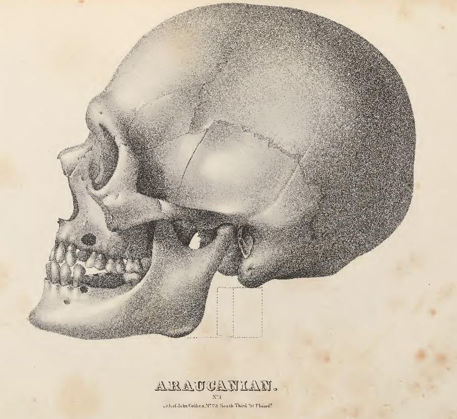 Der menschliche Schädel - Biologie Artikel » Serlo.org