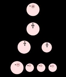 meiose bei der frau
