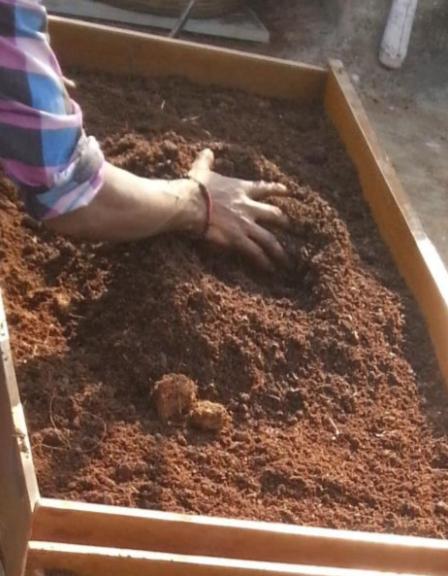 Microgreens Soil